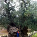Carovigno. Tusicchio in front of the oldest and biggest olive tree of Salento